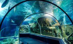 Okeanarium-Sochi-Discovery-World-v-Adlere