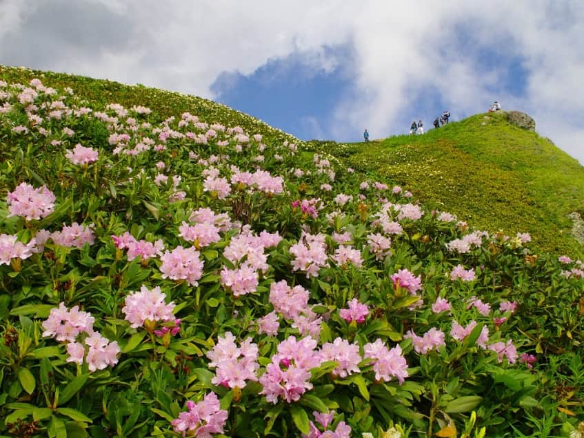 Цветы на одной из местности - фото