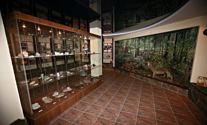 Музей природы в Сочи - фото