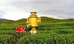 Самовар на чайной плантации - фото