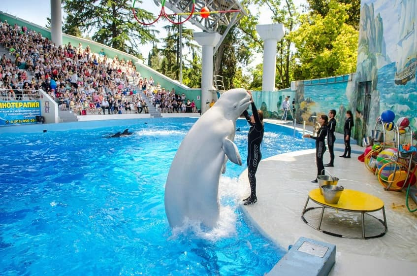 Дельфинарий в парке Ривьера - фото