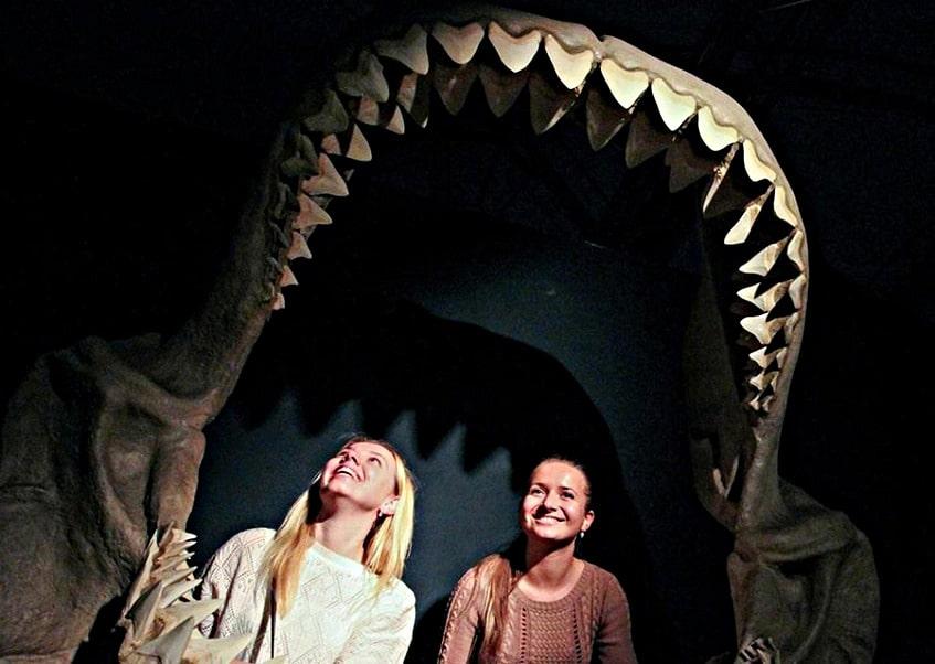 Пасть большой белой акулы или кархародон - фото