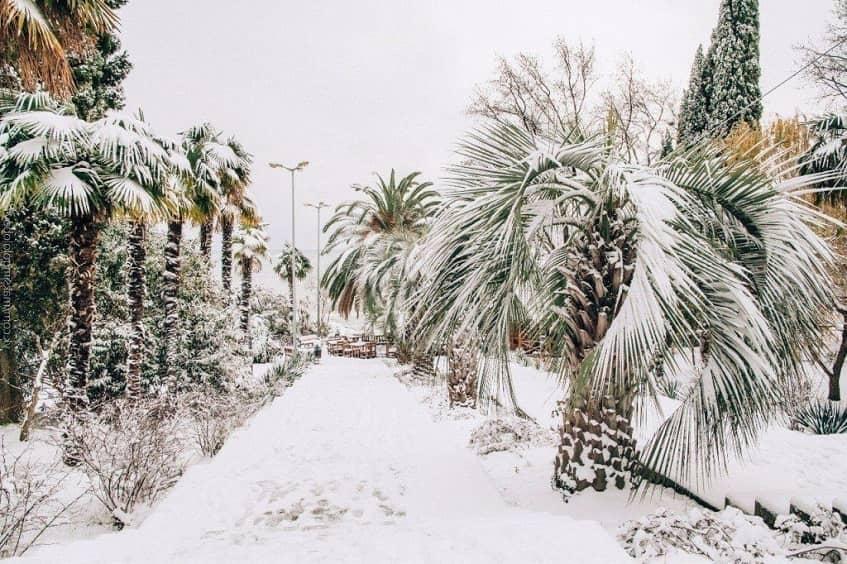 Зимний Дендрарий - фото