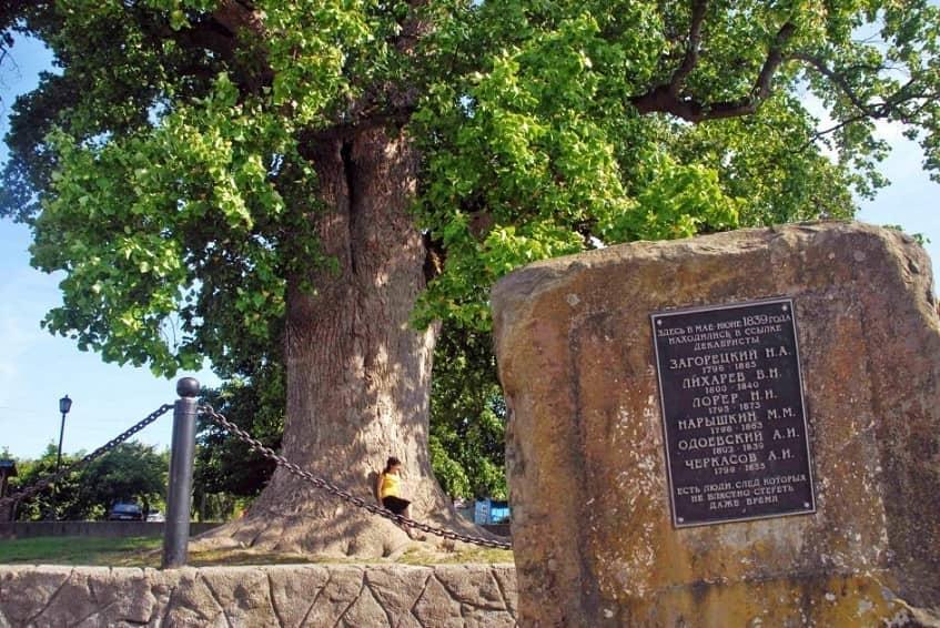 Тюльпановое дерево в осенний период - фото