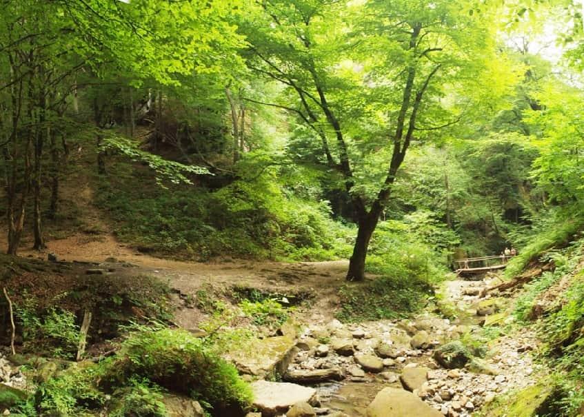 Растительность ущелья - фото