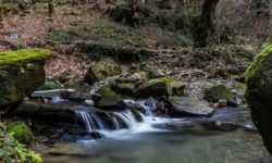reka-godlik