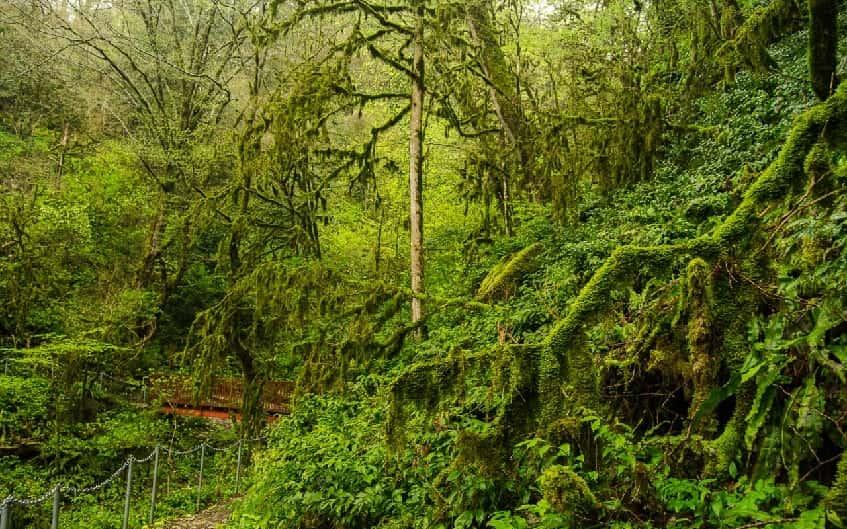 Волконское ущелье - фото