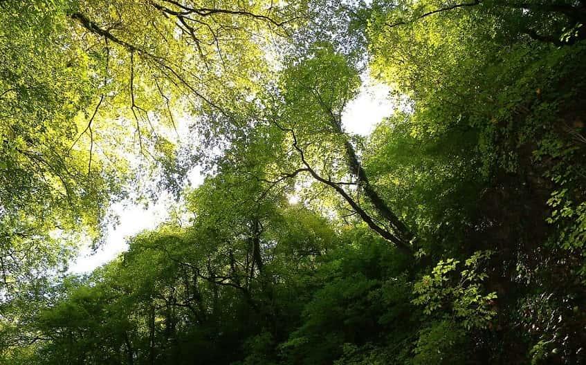 Зелёный уголок разных пород деревьев - фото