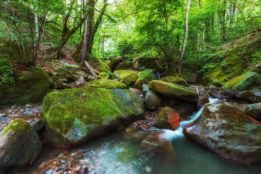 Живописная красота зелёного уголка ущелья - фото