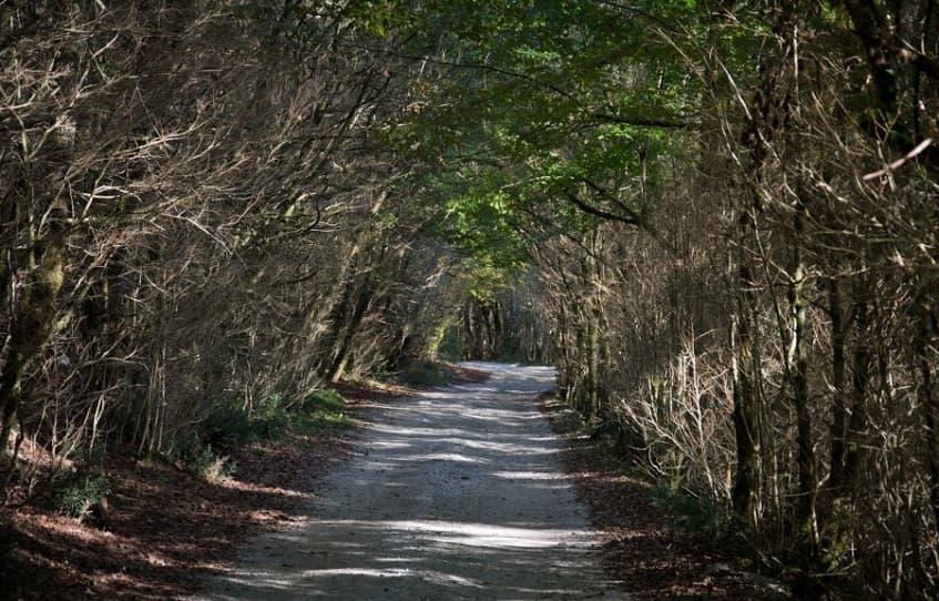 Грунтовая дорога от поселка Красная Воля к ущелью - фото