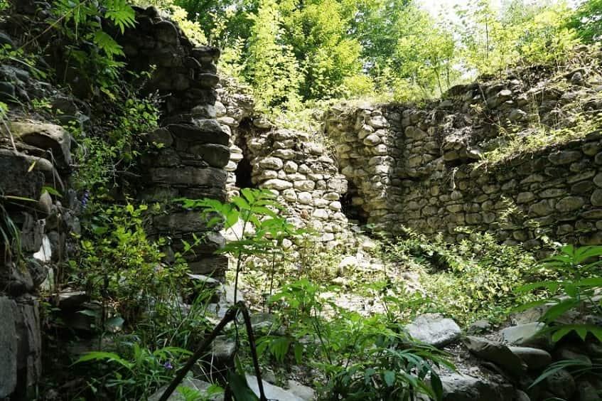 Руины в чаще реликтового леса - фото