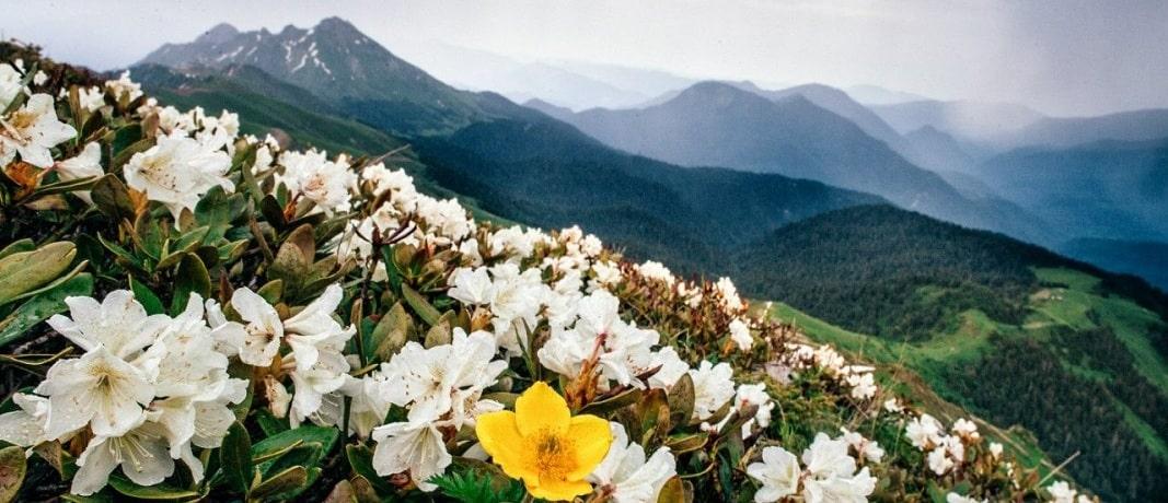 Сочи весной - фото