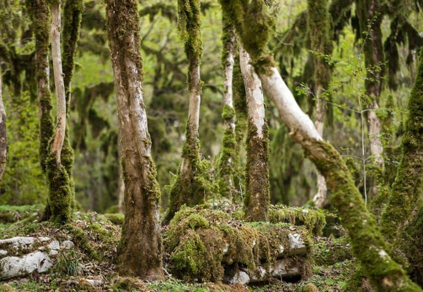 Волшебный лес на территории каньона - фото