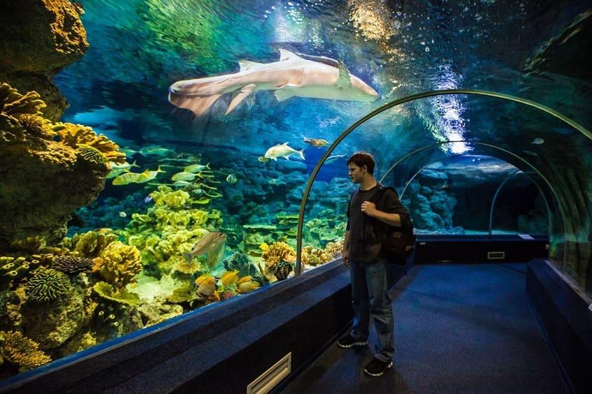 Океанариум Адлера - фото
