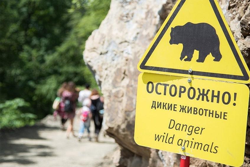 Предупреждающий знак о наличии диких животных - фото